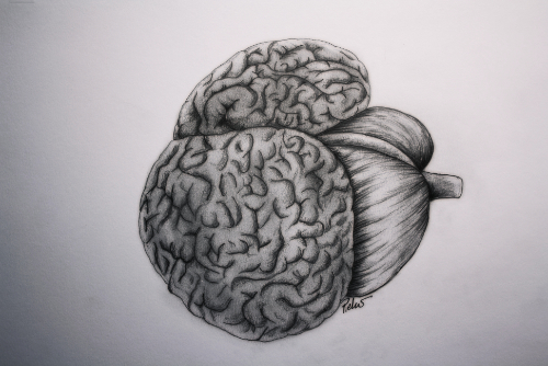 Dolphin Brain (small)