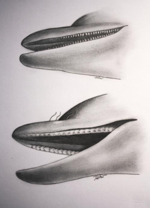 Dolphin Calf (small)