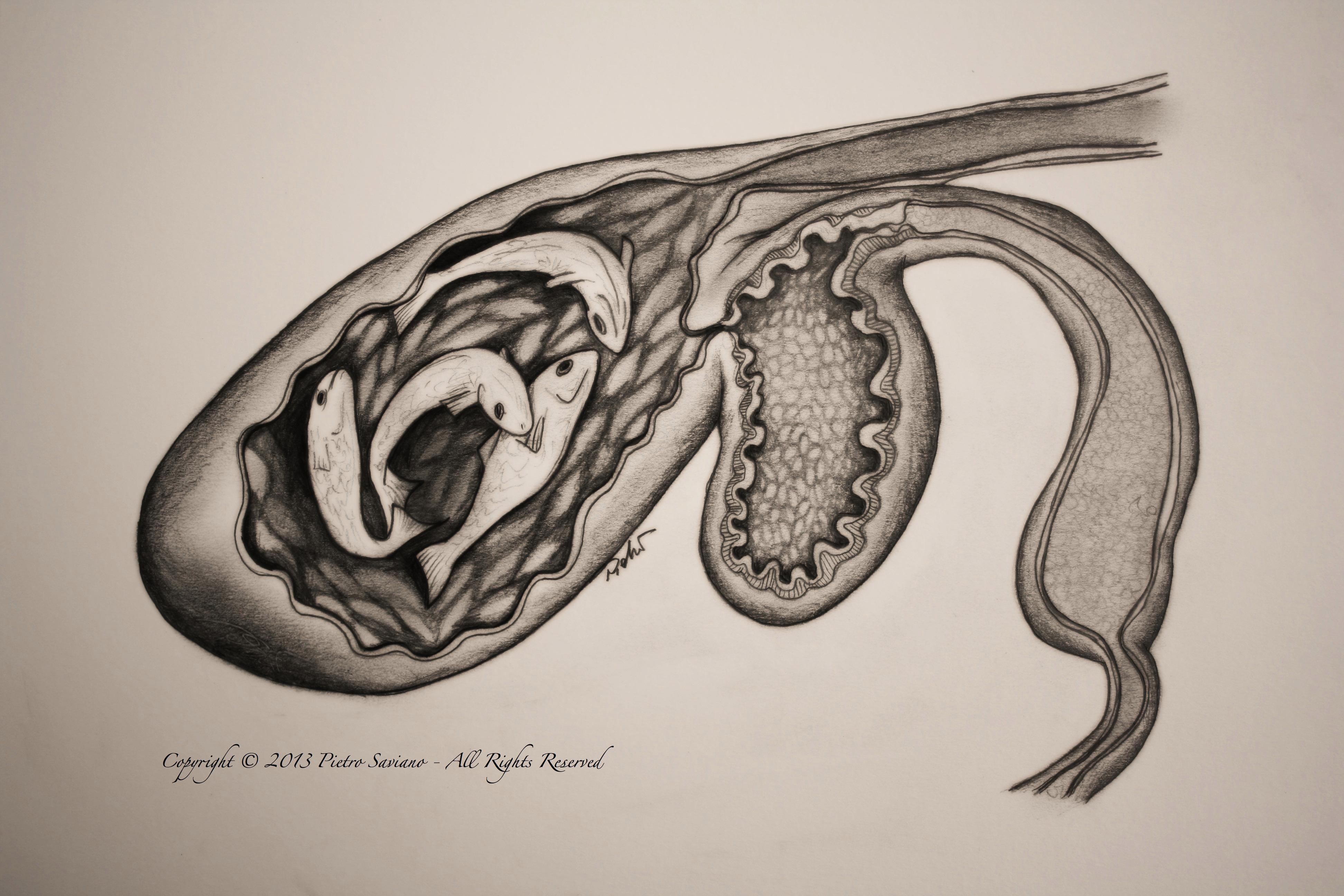 Anatomy – Pietro Saviano